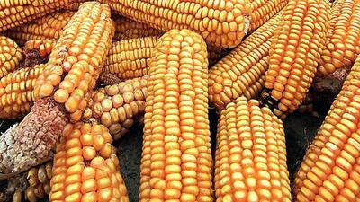 Cinco cultivos que podemos hacer más fuertes ante el cambio climático ma...