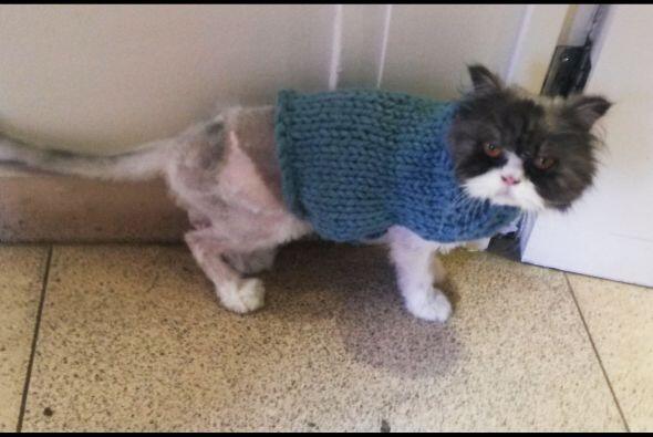 Su recuperación necesitó de tratamiento con cuidados inten...