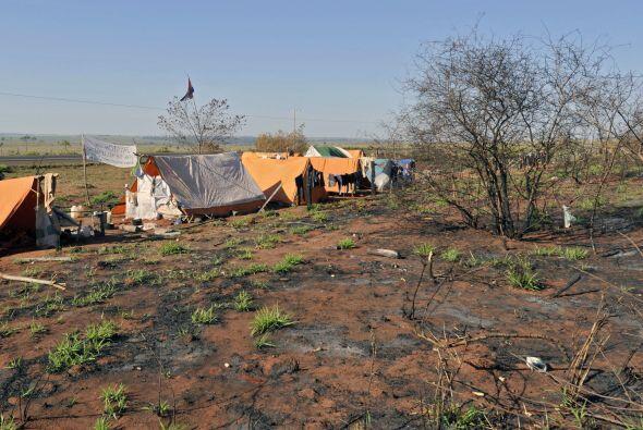 En represalia contra los productores en falta, fueron destruidas 86 hect...