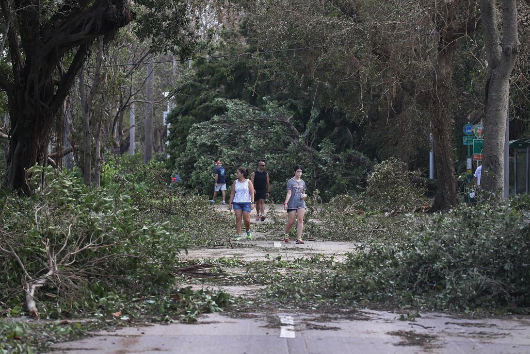 In photos: Getting home after Hurricane Irma Cientos de árboles cayeron...