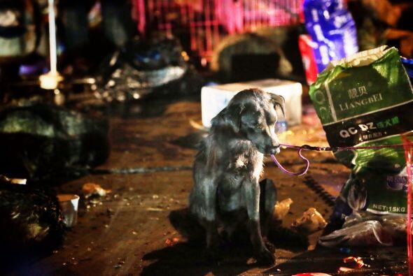 Los activistas decidieron unirse y  rescatarlos, pues la venta de carne...
