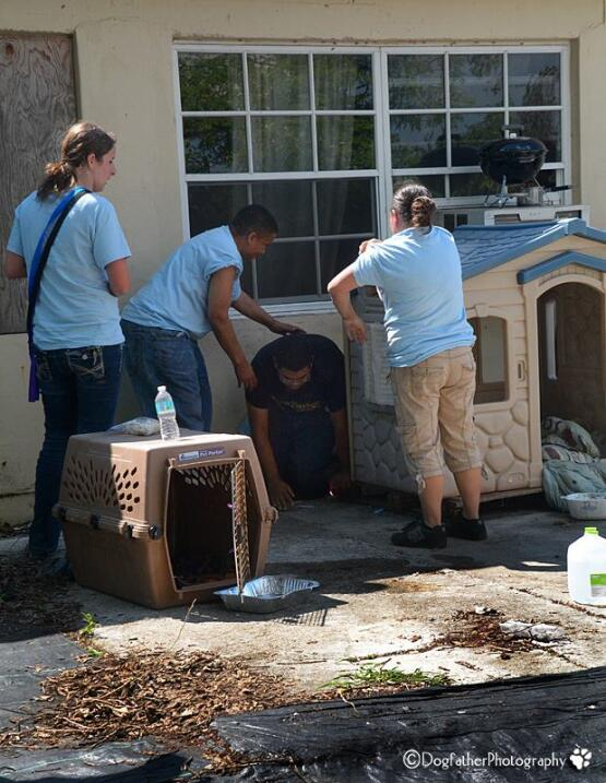 Un grupo de héroes sale a rescatar perros abandonados