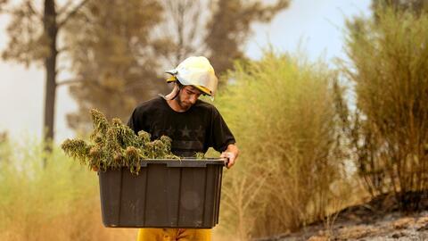 Anthony Lopez recoge lo que queda de una plantación de marihuana...