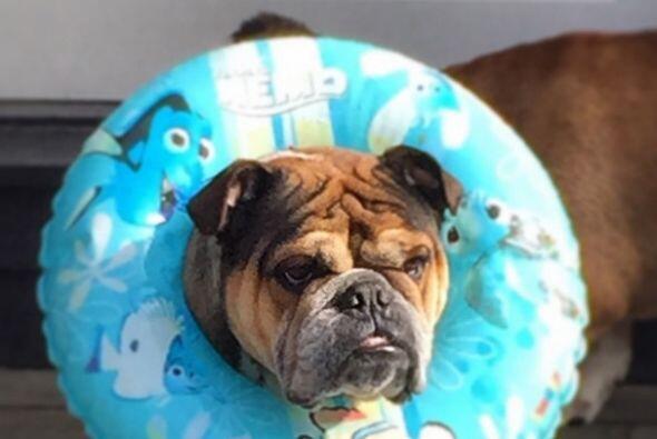 Y tú ¿ya tienes plan para las vacaciones de verano con tu mascota?