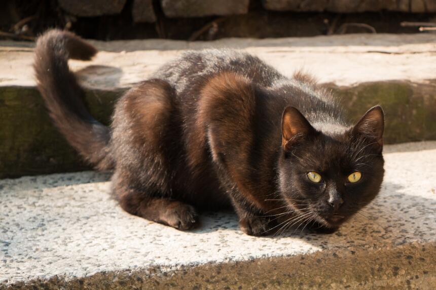 Conoce el misticismo del gato negro  10.jpg