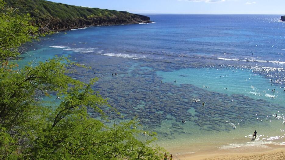 """""""Si los arrecifes se cuidan pueden volver a nacer"""", afirmó Joshua Cinner..."""