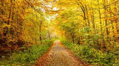 Cuando la mejor terapia es un paseo entre los árboles