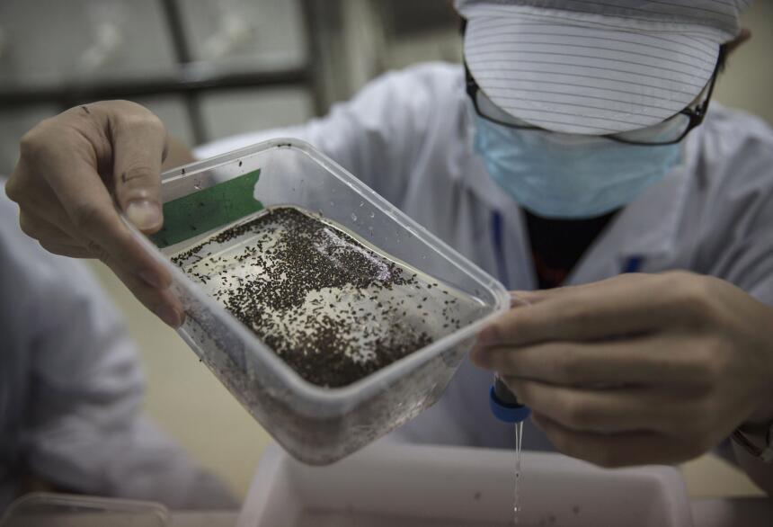 salud virus zika factoria china