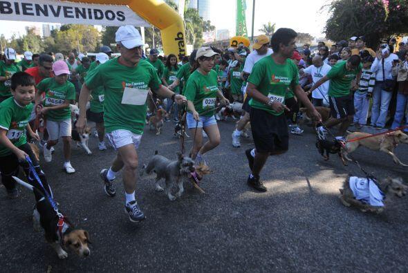 Alrededor de 1,150 perros y sus dueños protagonizaron una carrera por la...