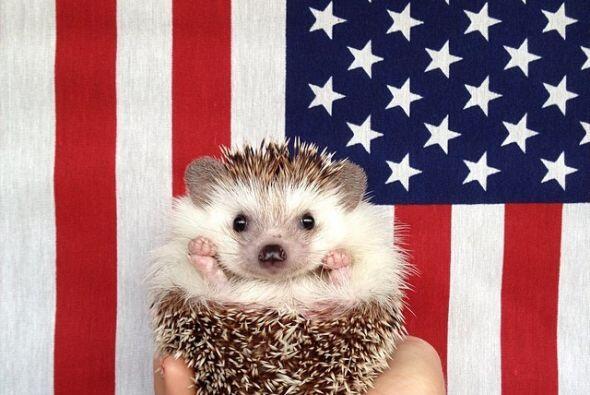 Como todo buen erizo, él tiene un lado patriótico