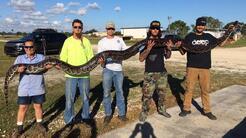 Cuatro hombres levantan la serpiente más grande que han cazado en...