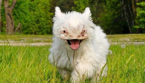 Lizadog (Lagarto con Perro)