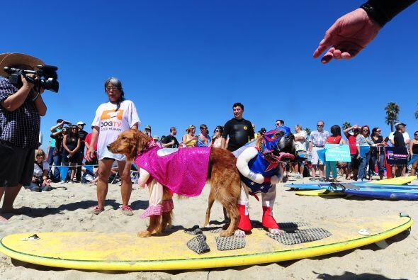 A la que  asistieron más de cien perros acompañados de sus...