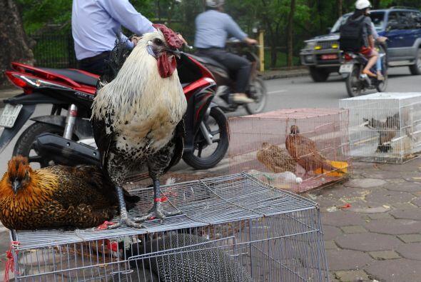 El portavoz recordó que, originalmente, el H7N9 era un virus que se mani...