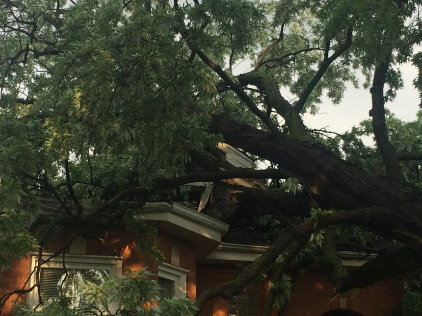 Se registraron numerosos reportes de árboles caídos en Berwyn por el mal...