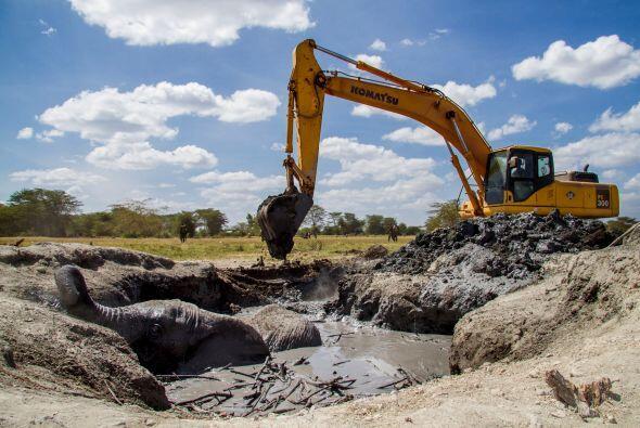 Creen que el animal buscaba una fuente de agua cercana, pues la sequía d...