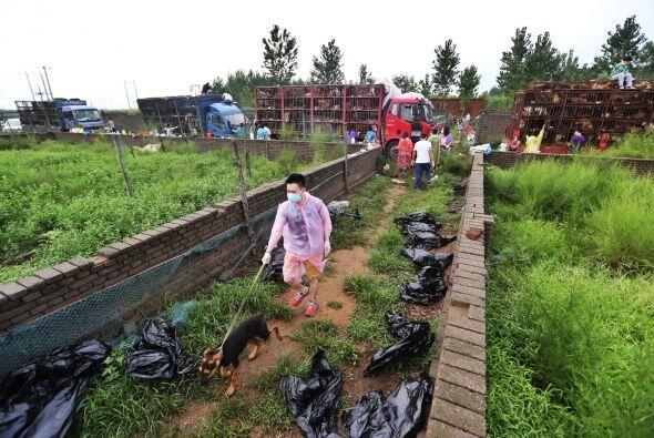 Los perros fueron trasladados a un refugio en el que miles de personas a...