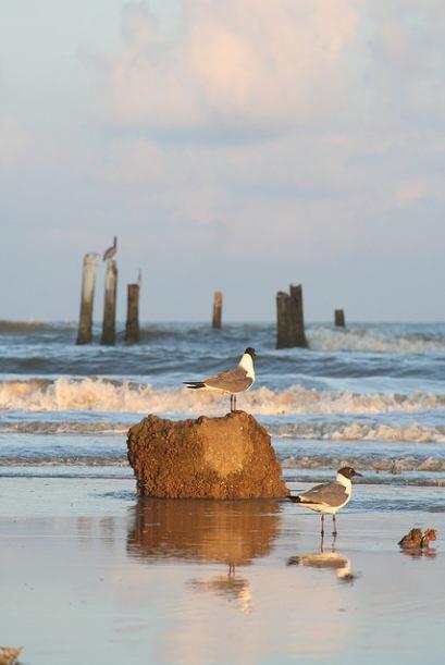 En Galveston disfrutarás de la tranquilidad que te ofrece el mar y encon...