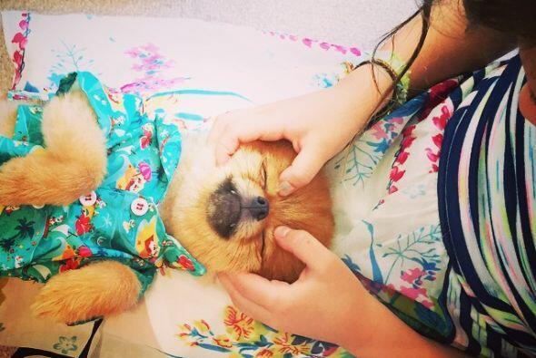 Sabrina adora a su perrito, hasta le da masajes.