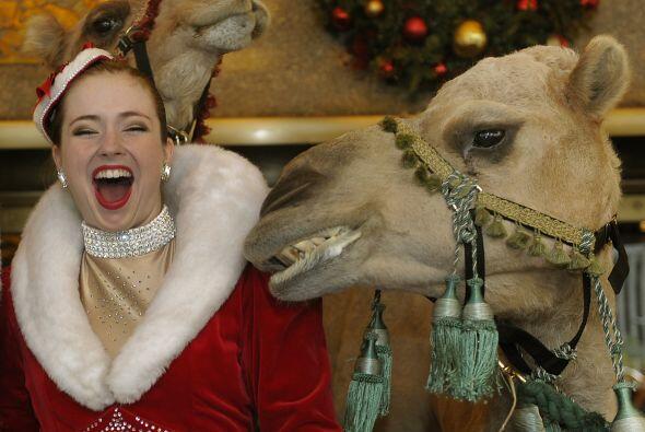 Los camellos parecían disfrutar de lo lindo el paseo. A fin de cuentas,...