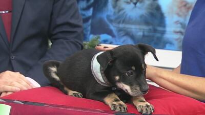Arizona Humane Society ofrece un evento especial para los niños