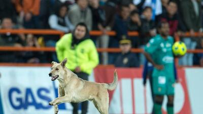 Un espontáneo peludo y de cuatro patas brincó a la cancha del Estadio Hidalgo