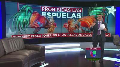 Prohíben peleas de gallos en Puerto Rico