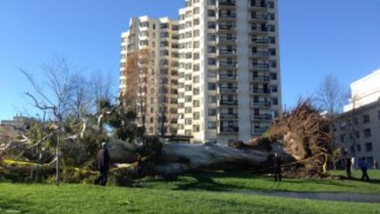 Árboles caídos por los fuertes vientos del área.