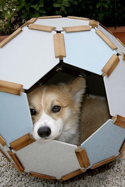 Recuerda que cuando llevas una mascota a tu hogar, éste se convierte tam...