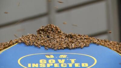 Un enjambre de abejas irrumpe en Time Square
