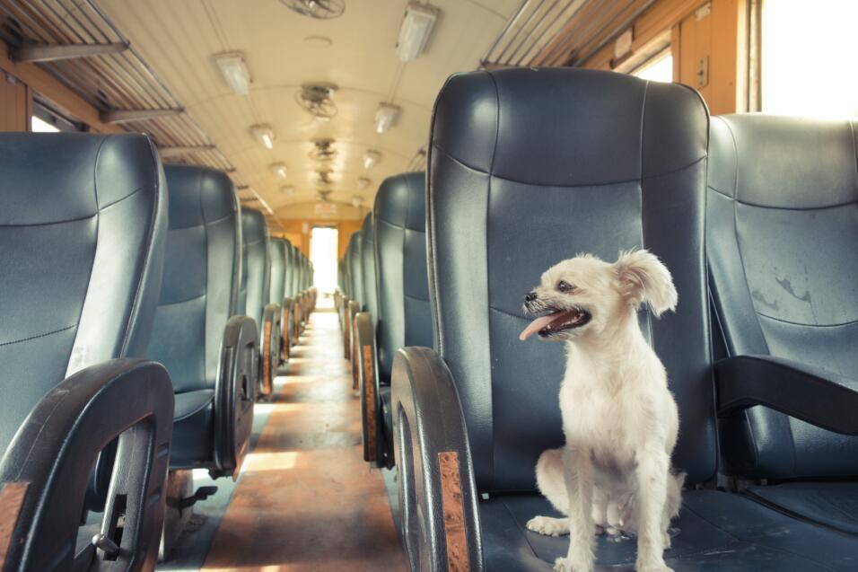 El 'ABC' de viajar con tu mascota