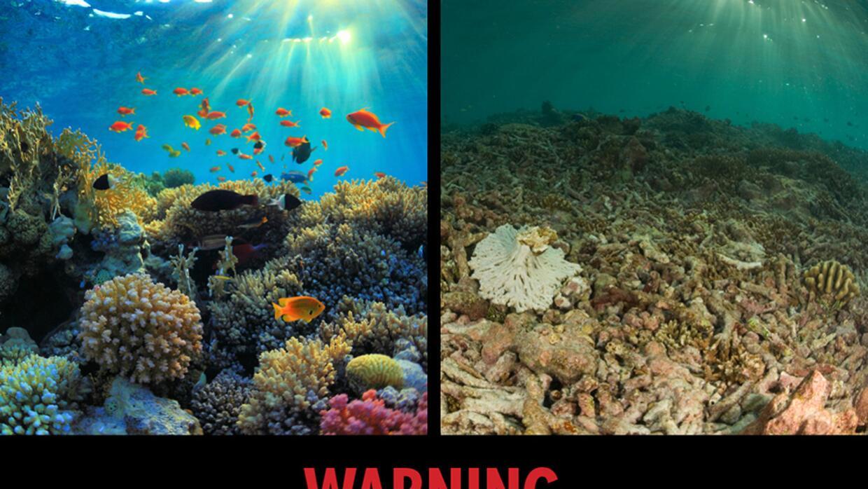 Ejemplo de etique de advertencia sobre Cambio climático
