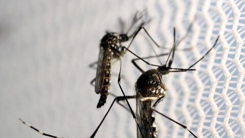 Si sospecha que tiene el virus, evite picaduras de mosquitos usando repe...