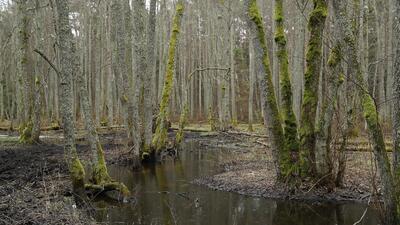 La deforestación de manglares y humedales favorece entornos mucho más hú...