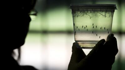Comienza la temporada de mosquitos en muchas partes del país.