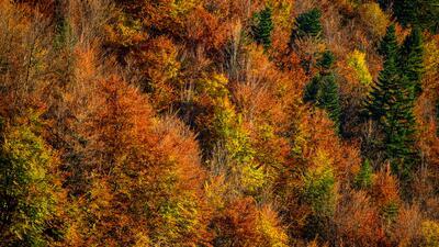¿Por qué las hojas cambian de color en otoño? La explicación no es tan sencilla como parece