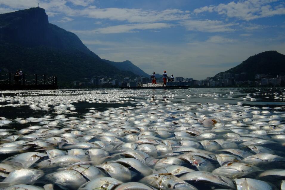 Este es el río Fuhe cubierto de peces muertos por la contaminación del a...