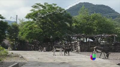 Violencia en México genera pueblos fantasma