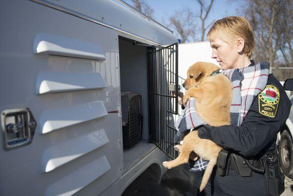 Por el momento los caninos se encuentran en un proceso de recuperación,...