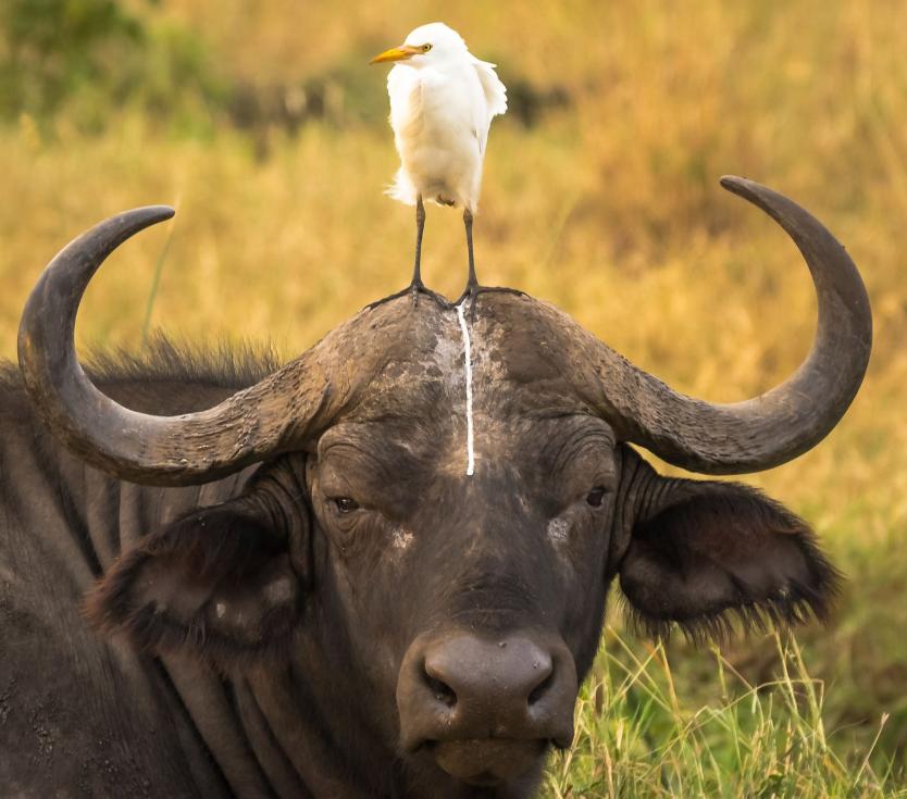 Te retamos a no reírte con esta galería de animales salvajes  Screen Sho...