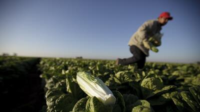Alerta en EEUU por nuevo brote de E. coli en lechugas romanas