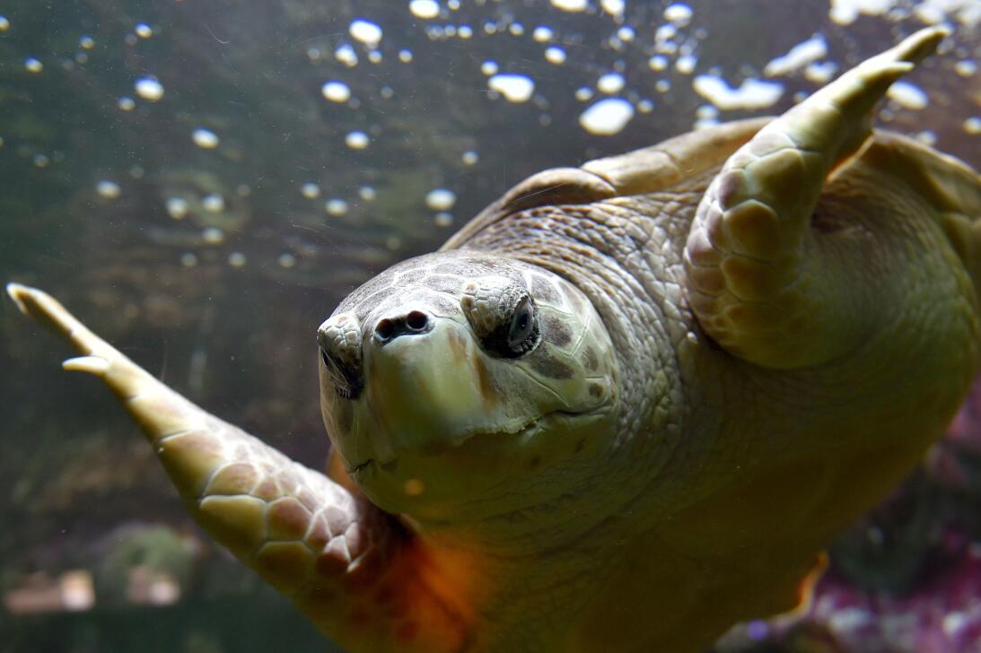 Cinco superpoderes de las tortugas que ni sospechabas GettyImages-628252...