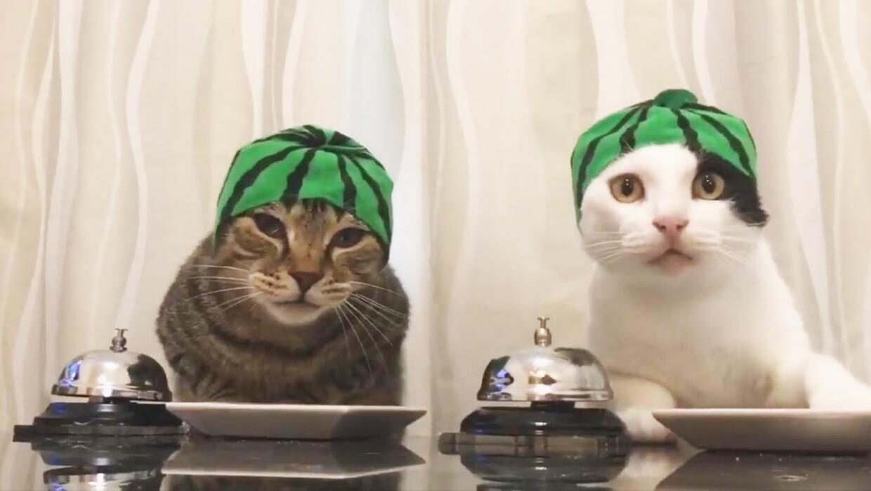 El videíto: Regresan los gatos que piden comida con una campana, esta ve...