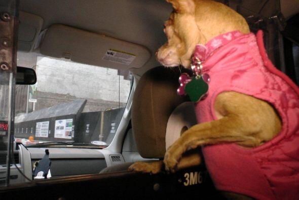 Me gustar recorrer la ciudad en taxi.