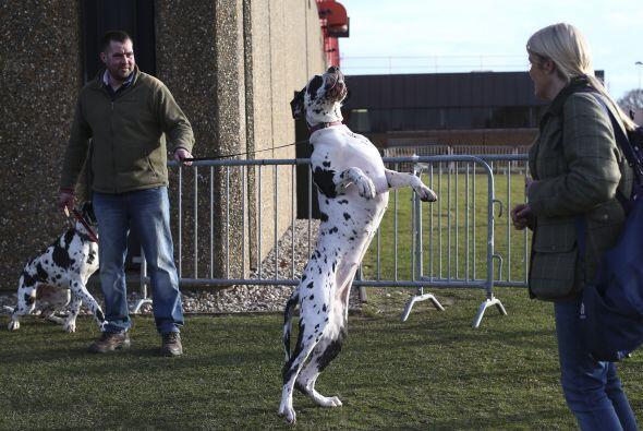 Todos los perros son incomparables, ¡pero estos canes compiten por...