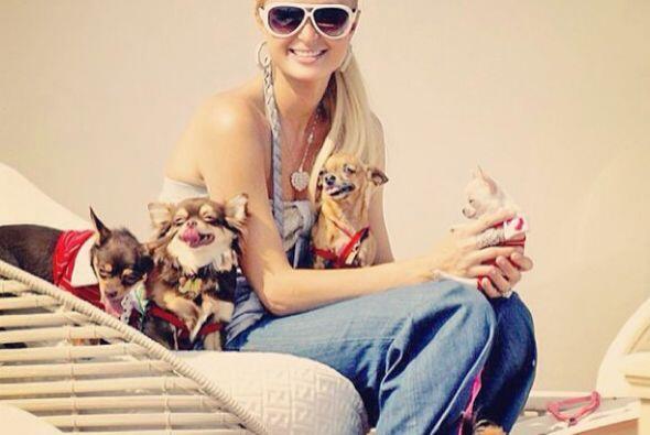 Paris Hilton nos presentó a sus verdaderos amores, ¡sus perritos!   Mira...