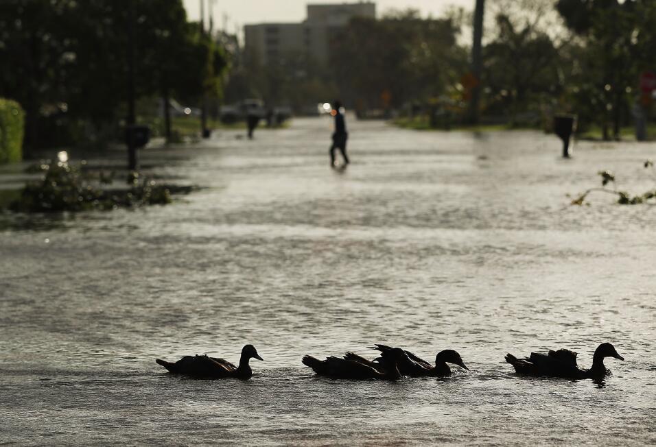 Tacos y agua de coco en un Naples que amaneció inundado y con numerosos...
