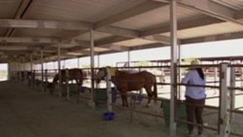 """El establo de caballos """"Desert View"""""""