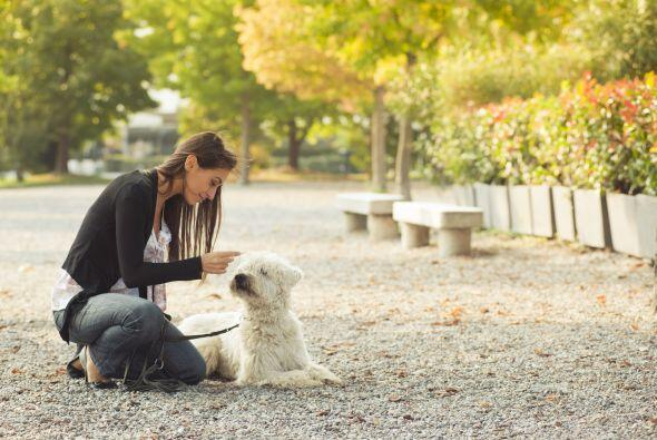 Al llevar a tu perro a pasear, evita que beba agua de los charcos.