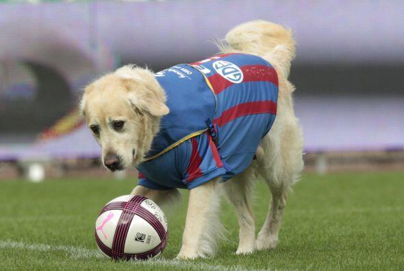 Deben estar desesperados para poner todas sus esperanzas en este canino....